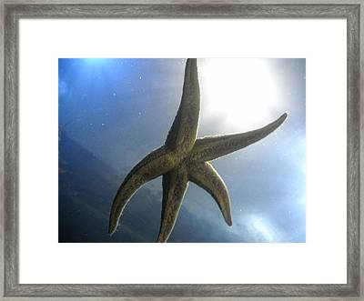 Framed Print featuring the photograph Starlight by Kristen R Kennedy