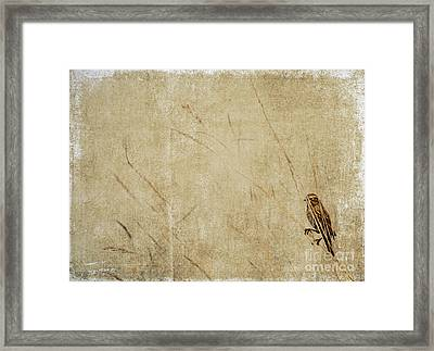 Starling In The Reeds Framed Print