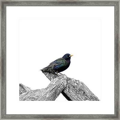 Starling On Roof Framed Print