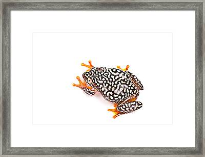 Starry Night Reed Frog Framed Print by David Kenny