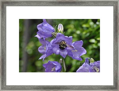 Stars And Bees Framed Print