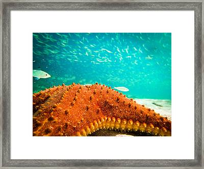 Stars And Fish And Starfish Framed Print