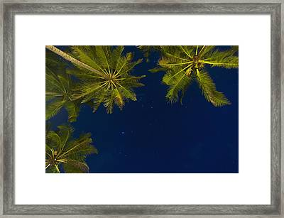 Stars At Night With Palm Tree Thalpe Framed Print by Ian Cumming