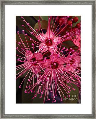 Stars Framed Print by Michelle Meenawong