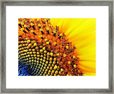 Stars Of The Sun Framed Print by Marianna Mills