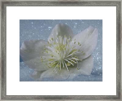 Stars Of Winter Framed Print by Debra     Vatalaro