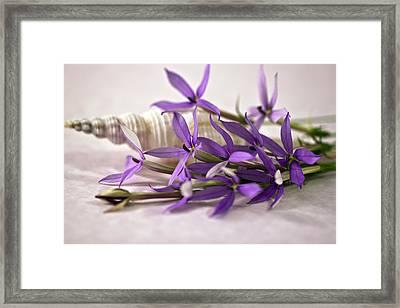 Starshine Laurentia Flowers And White Shell Framed Print