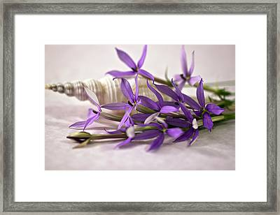 Starshine Laurentia Flowers And White Shell Framed Print by Sandra Foster