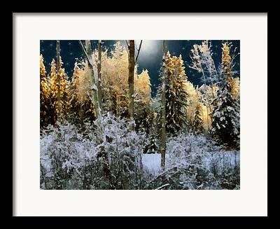 Dewinter Framed Prints