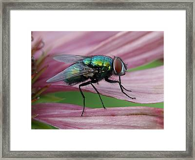 Start Your Engines Framed Print by Juergen Roth