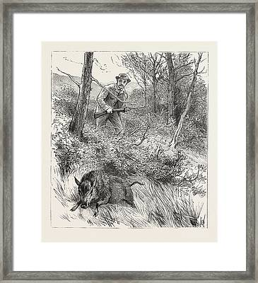 Starts A Pig While Looking For Woodcock Framed Print by English School