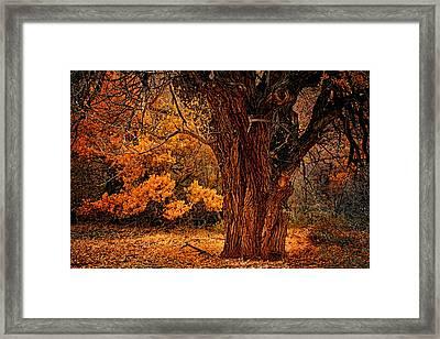 Stately Oak Framed Print by Priscilla Burgers