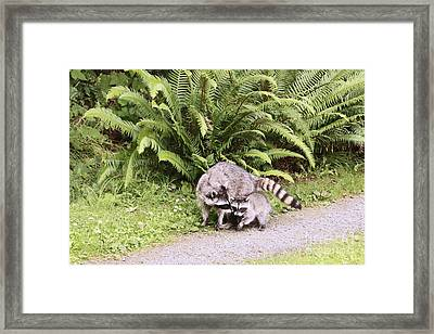Stay Close And Run Fast  Framed Print by Kym Backland