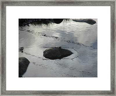 Framed Print featuring the photograph Stay In The Middle My Friend by Marie Neder