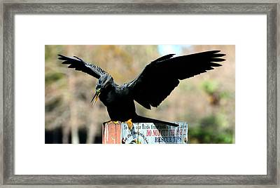 Stay Off Framed Print by Julie Cameron