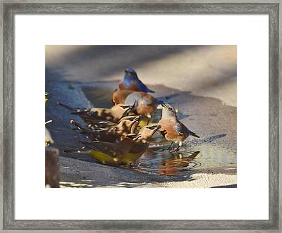 Stay On Your Side Framed Print by Linda Brody