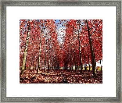 Framed Print featuring the photograph Stay by Viviana  Nadowski