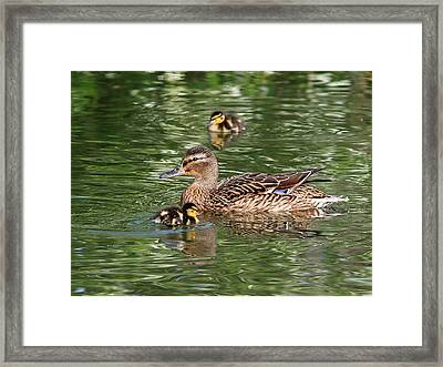 Staying Close To Mom Framed Print by Gill Billington
