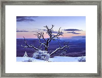 Steadfast  Framed Print by Dustin  LeFevre