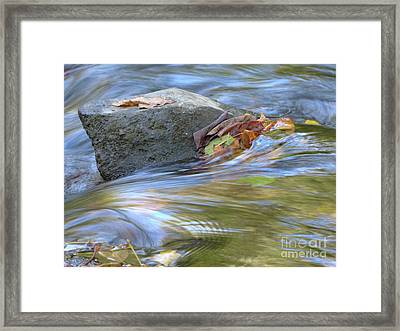 Framed Print featuring the photograph Steadfast by Jane Ford