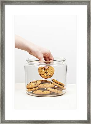 Stealing Cookies From The Cookie Jar Framed Print by Elena Elisseeva