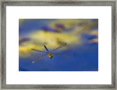 Framed Print featuring the photograph Stealth Chopper by Gary Holmes