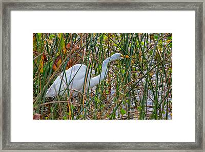 Stealthy Egret Framed Print by John M Bailey