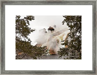 Steamy Bison Framed Print