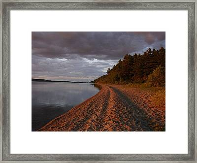Steel Rose Framed Print by Kristina Mitchell