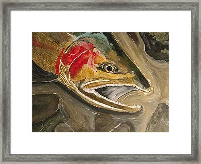 Steelhead Buck Framed Print