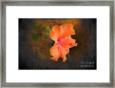 Steely Hibiscus Framed Print by The Stone Age