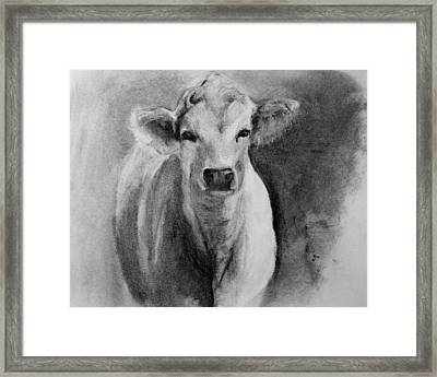 Steer- Drawing From Life Framed Print