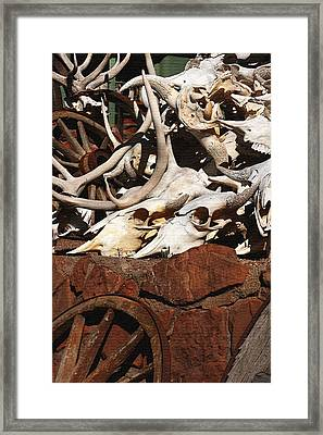 Steer Skulls And Antlers Framed Print by Art Block Collections