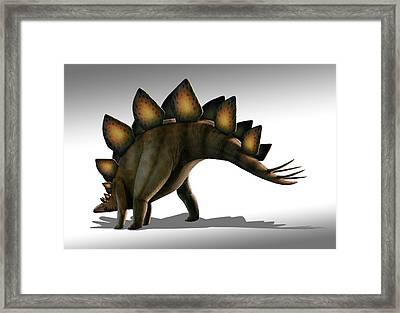 Stegosaurus Dinosaur Framed Print