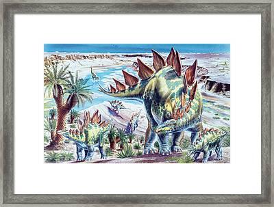 Stegosaurus Dinosaurs Framed Print