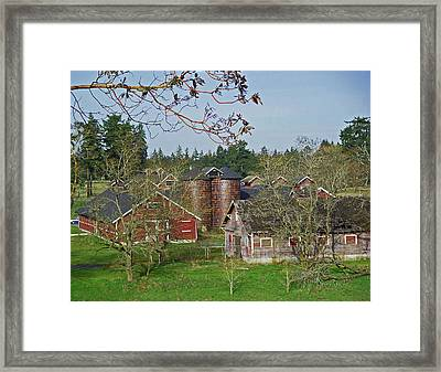 Steilacoom Park Barn And Silo's Framed Print