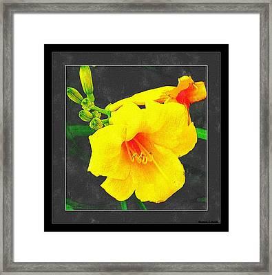 Stella Dora Day Lilies Framed Print by Rosemarie E Seppala