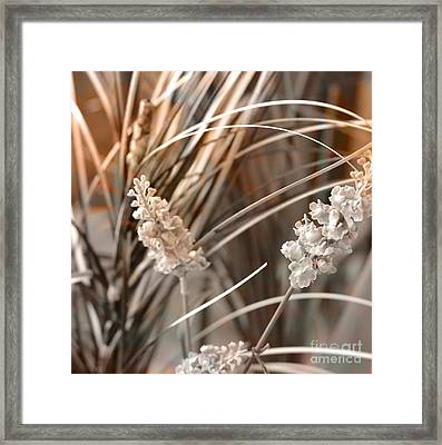 Stems IIi Framed Print
