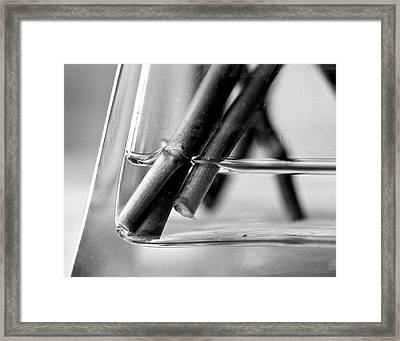 Stems Framed Print by Simone Ochrym