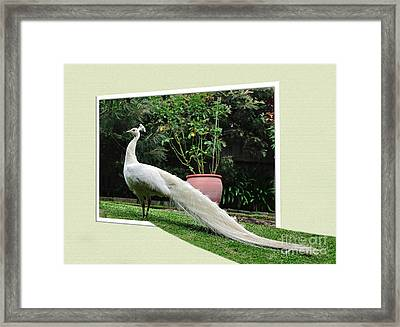 Step Into My Garden Framed Print by Kaye Menner