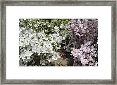 Step Into Spring Framed Print