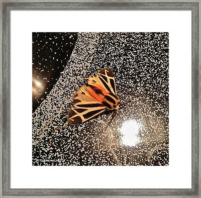 Step Into The Light Framed Print by Jason Williamson