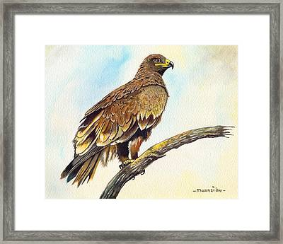 Steppe Eagle Framed Print
