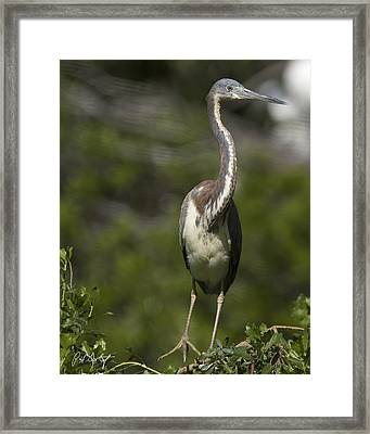 Stepping Carefully Framed Print by Phill Doherty