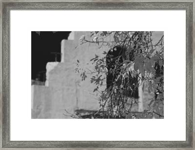 Steps And Fall Jerome Black And White Framed Print by Scott Campbell