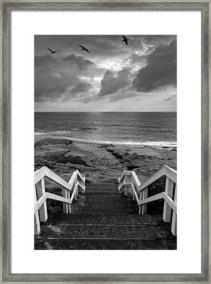 Steps And Pelicans - Black And White Framed Print