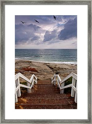 Steps And Pelicans Framed Print