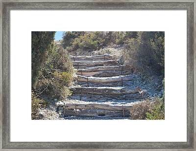 Steps In The Woods Framed Print by George Katechis