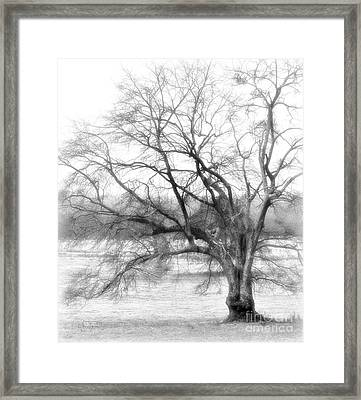 Sterling Fog Framed Print