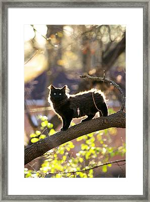 Framed Print featuring the photograph Sterling by Jane Melgaard